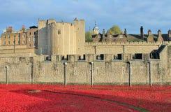 Torre de Londres con las amapolas Imagen de archivo libre de regalías