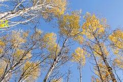 Torre de los árboles de arriba, coronado en amarillo y anaranjado Fotografía de archivo libre de regalías
