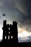 Torre de los cuervos Imagen de archivo libre de regalías
