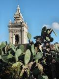 Torre de Rabat Cathedtal que aumenta acima de um cacto de pera espinhosa Fotos de Stock Royalty Free