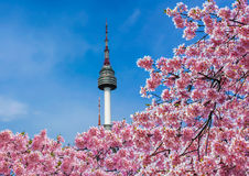 Torre de Seoul fotografia de stock royalty free