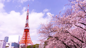 Torre de Tokio con el primero plano de Sakura en tiempo de primavera en Tokio Fotografía de archivo libre de regalías