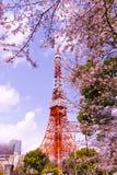 Torre de Tokio con el primero plano de Sakura en tiempo de primavera en Tokio Imagen de archivo libre de regalías