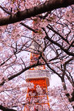 Torre de Tokio con el primero plano de Sakura en tiempo de primavera en Tokio Fotos de archivo libres de regalías