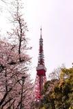 Torre de Tokio con el primero plano de Sakura en tiempo de primavera en Tokio Imágenes de archivo libres de regalías