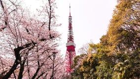 Torre de Tokio con el primero plano de Sakura en tiempo de primavera en Tokio Foto de archivo libre de regalías