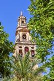 Torre del Aliminar Tower δέντρα Mezquita Κόρδοβα Ισπανία Στοκ φωτογραφία με δικαίωμα ελεύθερης χρήσης