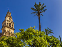 Torre del Aliminar Tower Spire Palm Tree Mezquita Cordoba Spain Stock Photography