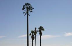 Torre del teléfono celular disfrazada como palmera Imagenes de archivo
