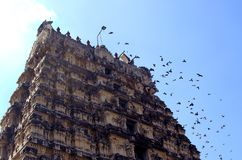 Torre del templo con los pájaros de vuelo Imagen de archivo libre de regalías