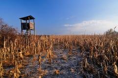 Torre dell'allerta di caccia Fotografia Stock