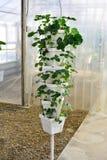 Torre della pianta di fragola Immagini Stock Libere da Diritti
