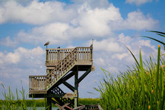 Torre di Birding di osservazione Immagine Stock Libera da Diritti