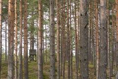 Torre di caccia fra i tronchi di albero Fotografie Stock Libere da Diritti