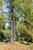 Torre di caccia in legno alpino Carinzia occidentale, Austria Fotografia Stock Libera da Diritti
