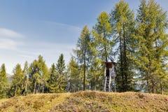Torre di caccia in legno alpino Carinzia occidentale, Austria Immagine Stock Libera da Diritti