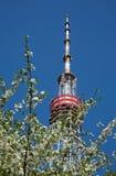 Torre di Kiev TV con l'albero del fiore in priorità alta Immagini Stock Libere da Diritti