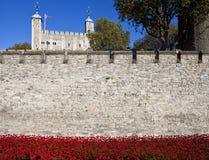 Torre di Londra e dei papaveri Fotografie Stock Libere da Diritti