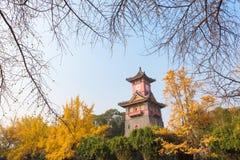 Torre di orologio di Chengdu con gli alberi in autunno fotografie stock libere da diritti