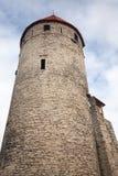 Torre di pietra antica alta. Vecchia Tallinn Immagine Stock