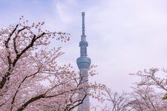 Torre di Tokyo Skytree con i fiori di ciliegia in piena fioritura al parco di Sumida immagine stock