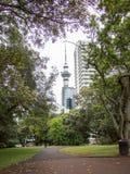 Torre do céu de Auckland, Nova Zelândia Vista de Albert Park Foto de Stock