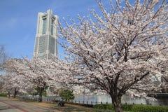 Torre do marco de Yokohama e as flores de cerejeira Fotos de Stock Royalty Free