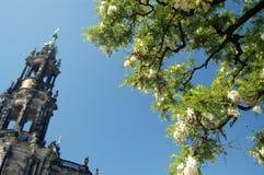 Torre e árvore da catedral Fotografia de Stock