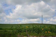Torre e girassol do céu Foto de Stock