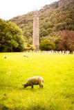 Torre e pecore rotonde in Glendalough Fotografie Stock