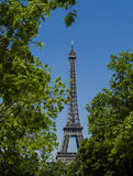 Torre Eiffel circondata dai rami di albero, Parigi, Francia immagine stock libera da diritti