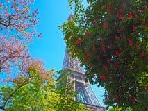 Torre Eiffel com a árvore da mola em Paris, França Fotos de Stock Royalty Free