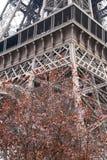 Torre Eiffel e ciliegia di fioritura, Parigi, Francia, Europa Immagine Stock Libera da Diritti