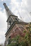 Torre Eiffel e ciliegia di fioritura, Parigi, Francia, Europa Immagini Stock