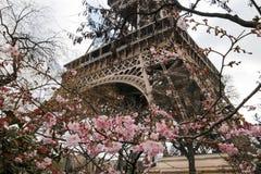 Torre Eiffel e ciliegia di fioritura, Parigi, Francia, Europa Fotografie Stock Libere da Diritti