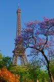 Torre Eiffel ed alberi colorati Fotografia Stock Libera da Diritti