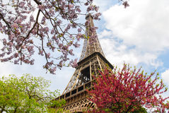 Torre Eiffel rodeada por las flores de la primavera Fotografía de archivo