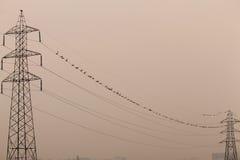 Torre eléctrica dos conectada por los pájaros Fotos de archivo
