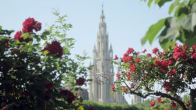 Torre gótica del estilo del ayuntamiento en Viena, Austria, visión a través de arbustos de las rosas en parque de la ciudad almacen de video