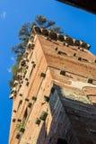 Torre Guinigi Lucca Royalty Free Stock Photos