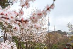 Torre hermosa de Seul del punto de vista o torre de N de lejos con la flor de cerezo rosada, estación de Sakura en la primavera,  Fotografía de archivo libre de regalías