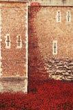 Torre Londra del 12 novembre 14 Installazione ceramica dei papaveri Fotografia Stock Libera da Diritti