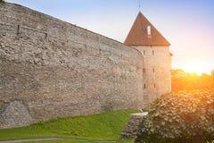 Torre medieval, pieza de la pared de la ciudad, Tallinn, Estonia foto de archivo libre de regalías