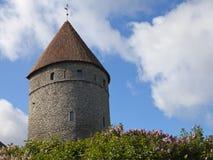 Torre medieval, pieza de la pared de la ciudad, y la lila floreciente imagen de archivo
