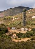 Torre mobile della trasmissione del cellulare travestita come albero di abete in California Immagine Stock Libera da Diritti