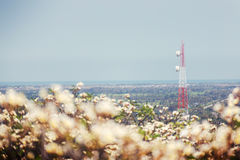 Torre molle di telecomunicazione del fuoco con la priorità alta del fiore della sfuocatura Fotografia Stock Libera da Diritti