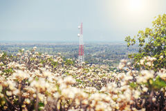 Torre molle di telecomunicazione del fuoco con la priorità alta del fiore della sfuocatura Immagine Stock Libera da Diritti
