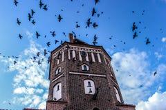 A torre, pássaros no céu, pássaros voa no céu acima da torre Fotografia de Stock Royalty Free