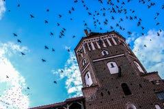 A torre, pássaros no céu, pássaros voa no céu acima da torre Imagens de Stock Royalty Free