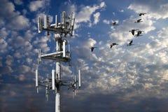Torre y multitud de gansos Foto de archivo